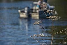 Lake Ride... - Manotick, Ontario, canada, North America Canada North, Ontario, North America, Nature, Plants, Naturaleza, Plant, Natural, Planting