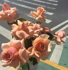 flowers, rose, and peach image Peach Aesthetic, Flower Aesthetic, Aesthetic Pics, Jandy Nelson, Keepsake The Label, Plants Are Friends, No Rain, It Goes On, My Flower
