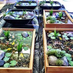Estanques estanques koi y peque os jardines for Estanque koi pequeno