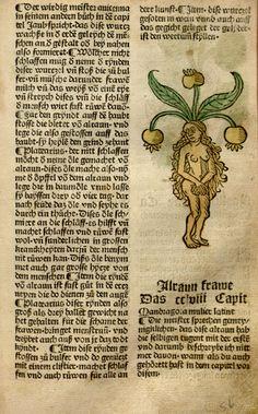 Mandragora, female [Alraun frawe] 1487, Gart der Gesundheit, (Hamsen Schönsperger)