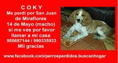 C O K Y Me perdi por San Juan de Miraflores 14 de Mayo (macho) si me ves por favor llamar a mi casa 980687144 / 990335933 Mil gracias www.facebook.com/perrosperdidos.buscanhogar