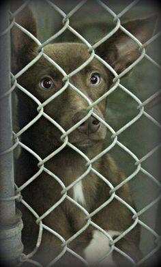 06/24/14 **URGENT ODESSA**Lab mix female less than a year old Kennel A23 Available NOW ****$51 to adopt  Located at Odessa, Texas Animal Control. 432-368-3527.