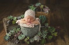 Newborn photo shoot with succulents.  Baby photography ideas with cactus