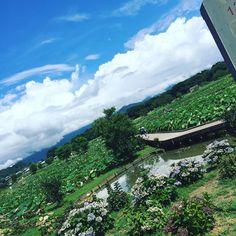 VeelPlezier 椿油のビスコッティ 昨日のドライブ写真です 蓮園に行きました 残念ながら時期を過ぎていてお花は少しでしたが青空にたくさんの緑に癒されました