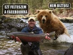 Look at My Big Fish! Why Are You Running Away? Bear Hunting Photobomb: This guy is in for a big surprise and will probably shit in his pants in 3 2 Animals And Pets, Funny Animals, Cute Animals, Funniest Animals, Animal Fun, Wild Animals, Tierischer Humor, Funny Bears, Mundo Animal
