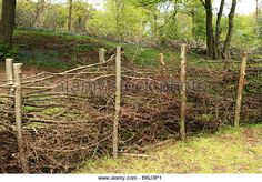 Dead hedge around coppiced woodland, Norsey Wood, Essex UK - Stock Image