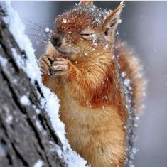 Forest Animals, Nature Animals, Animals And Pets, Funny Animals, Cute Animals, Animals In Snow, Wildlife Nature, Nature Nature, Nature Photos