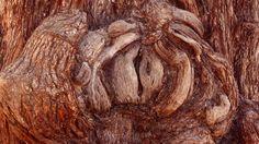 https://flic.kr/p/Ca9cps | #Chile Texturas de un tronco en #Atacama | Texture of a trunk in Atacama°° #チリ :アタカマ幹の質感