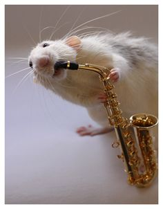 so cute but i have one question.....what instrument is that?