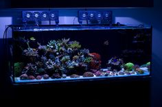 All sps tanks - Reef Central Online Community