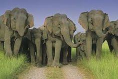 Family of Elephants...