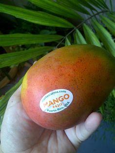 mango reina