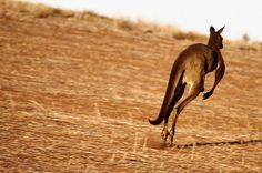 Kangaroo     http://maylocnuoc.biz.vn/loc-nuoc.html  http://maylocnuoc.biz.vn/may-loc-nuoc-ro-europura-105n.html  http://maylocnuoc.biz.vn/  http://maylocnuoc.biz.vn/may-loc-nuoc-ro-tinh-khiet-gia-dinh-gia-re-uong-truc-tiep.html