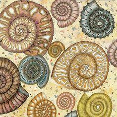 Fossils - Fiona Willis Art Greeting Card