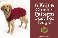 Trendy knitting projects for dogs lion brand ideas Crochet Dog Sweater, Dog Sweater Pattern, Sweater Knitting Patterns, Knit Or Crochet, Crochet Patterns, Crochet For Dogs, Crochet Dog Clothes, Irish Crochet, Crochet Ideas