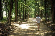 100 Tage – 10.000 Schritte täglich. Ein Erfahrungsbericht und 10 großartige Vorteile
