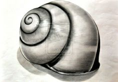 Shaping and tone of shell