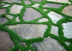 stone and moss - love walking on this barefoot