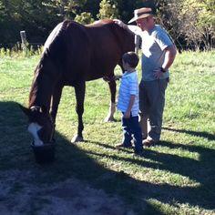 Nice horsey..........