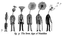 The Seven Ages of Mandelion by vonMonkey, via Flickr