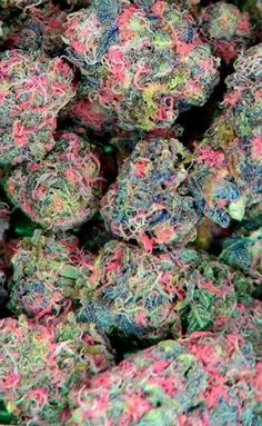 Gorgeous Cannabis Buds ~ marijuanachecks.com ~ http://facebook.com/legalizationchecks