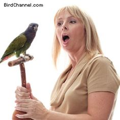 Use these tips to get your pet bird out of the cage and on to its playgym or stand.