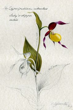 Nature oil paintings by CinziaMarotta Botanical Drawings, Botanical Illustration, Botanical Prints, Illustration Art, Realistic Oil Painting, Nature Drawing, Oil Painting Flowers, Orchids, Original Art