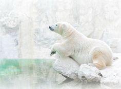 Лучшие фотографии National Geographic замай