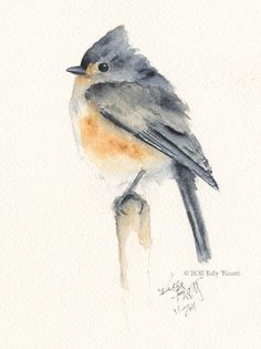 A watercolor painting of a Tufted Titmouse. I seriously used to be obsessed with these birds, just because of their name. Watercolor Pictures, Watercolor Bird, Watercolor Animals, Watercolour Painting, Painting & Drawing, Watercolors, Watercolor Portraits, Watercolor Landscape, Watercolor Artists