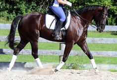 What being on the forehand means to the horse