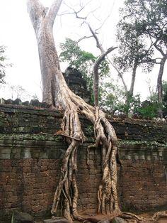 10 raízes de árvores que estão ganhando a guerra contra o concreto