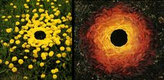 Dandelions and Leaves.    Andy Goldsworthy - British scultpture/ photographer/ artist.