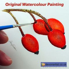 Original watercolor painting of rose hips. Botanical illustration, fine art realism. Rose hips are adorning the hedgerows at the moment, that lovely splash of scarlet on dull days is just beautiful. . #PaulHopkinson #TheDevonArtist #rosehipspainting #natureart #watercolourpainting #watercolorpainting #originalpainting #artworkforsale #natureillustration #botanicalillustration #originalartforsale #botanicalart