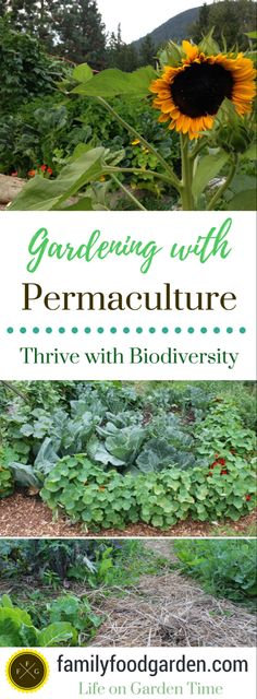 Organic Gardening Ideas Grow a Permaculture Garden (Less Work More Yields) ~Family Food Garden - Less work Amazing Gardens, Beautiful Gardens, Garden Mulch, Shaded Garden, Garden Pests, Growing Tomatoes In Containers, Home Vegetable Garden, Veggie Gardens, Organic Gardening Tips