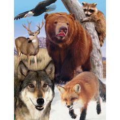 Masterpieces Puzzle Co Forest Life Jigsaw Puzzle Was: $6.99                     Now: $5.00