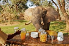 Breakfast in Africa - one never knows WHO will join you!