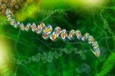 Chaos: Prospettive di cura per l'Amiotrofia spinale