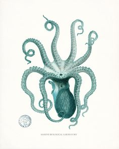Coastal Decor Natural History Octopus Giclee by vintagebytheshore