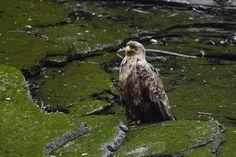 Fuglesafari – BirdSafari