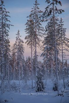 Real Winter #Finnishnature