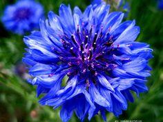 Définition illustrée de fleur