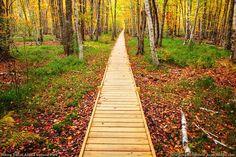 Acadia Hiking Trail, Bar Harbor Maine