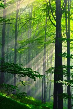 Summer Forest, Bulgaria