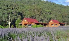 lavender view cottage. flowers Dec to March: Lavender view cottage in Bright