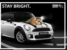 MINI COOPER, best car I've owned.  OK so the Mercedes was a smoother ride but Mini is a lot more fun!