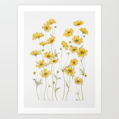 Yellow Cosmos Flowers Mini Art Print by jrosedesign Cosmos Flowers, Yellow Flowers, Watercolor Texture, Watercolor Flowers, Affordable Art, Flower Prints, Flower Artwork, Artwork Prints, Illustration Art