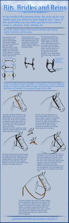 A tutorial from me! Have you missed it? I warn you huge file! Well this time I learn you how to draw bridles bits and reins. I got interested in it today when I saw pictures of horses which h. Horse Riding Tips, Horse Riding Clothes, Horse Information, Horse Saddles, Western Saddles, Western Tack, Horse Bridle, Horse Care Tips, Horse Facts