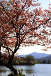 What to Do in Asheville   Asheville, NC's Official Tourism Web Site #asheville