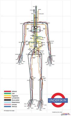 So clever – the human body visualized as a subway map by designer Sam Loman, a fine addition to these visual metaphors using he London Tube map.  Also see these vintage illustrations envisioning the body as a machine.