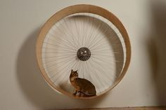 How to Build a Cat Wheel                                                                                                                                                                                 More                                                                                                                                                                                 More